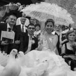 Porumbei la Nunta Targoviste Dambovita Inchiriere Porumbei Voiajori pentru Biserica Nunta